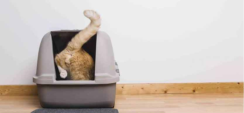 Kattesand Dyrebloggen artikkel