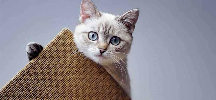 Klorestativ til katt Dyrebloggen artikkel