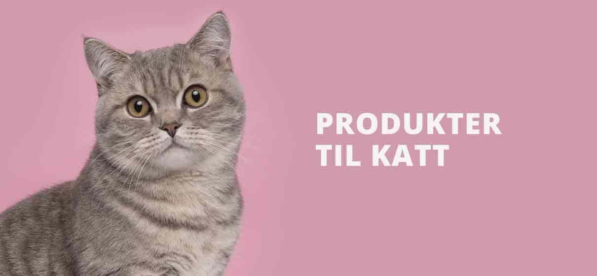 Katteutstyr butikk | Kattesenger og tilbehør til katt