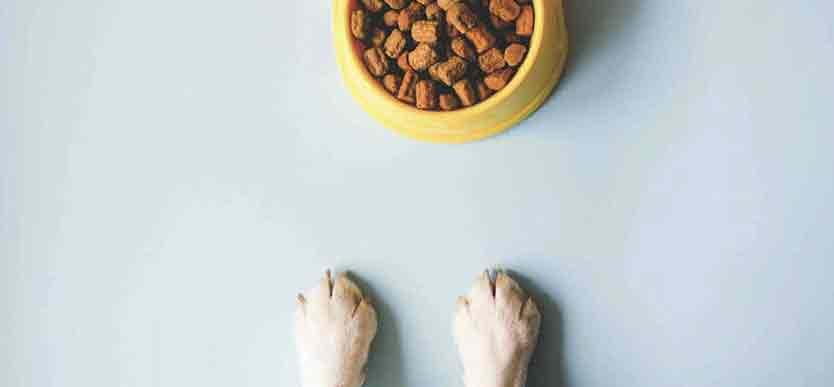 Hvordan velge riktig hundefôr   Blogg til valp