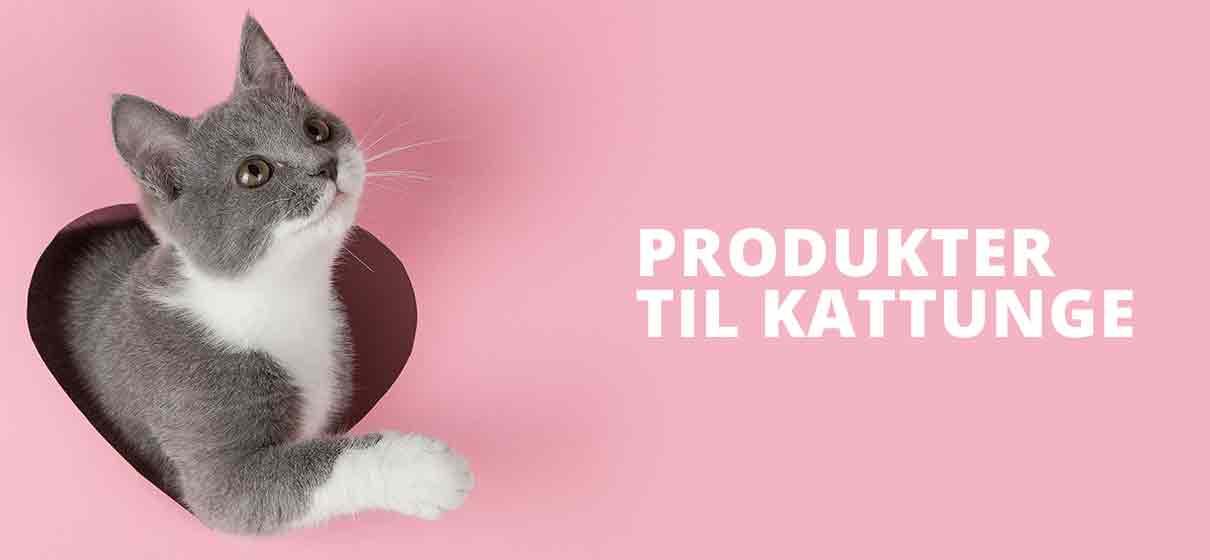 Kattungemat, bilbur, matskål til liten katt, utstyr til kattunge på nett
