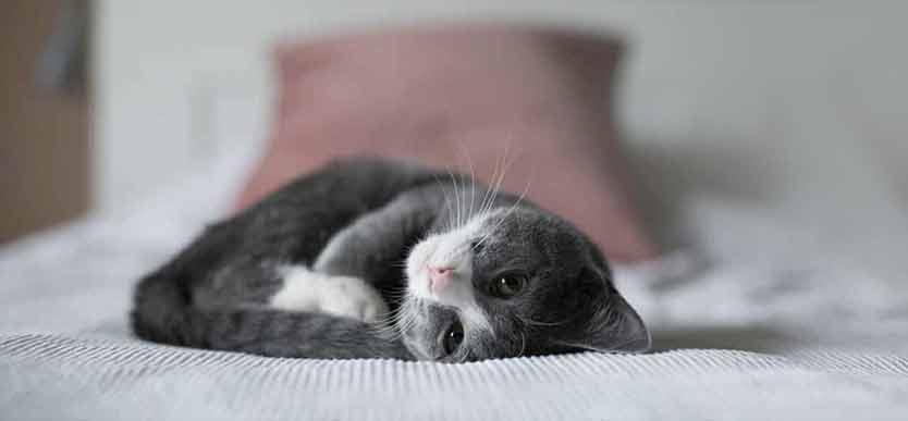 Blogg til kattunge ting å tenke på når du skal oppdra en kattunge