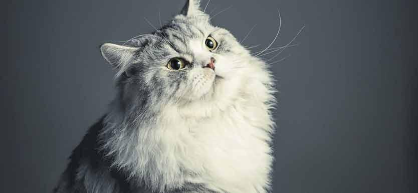 Blogg til kattunge dette katteutstyret trenger du til katten din