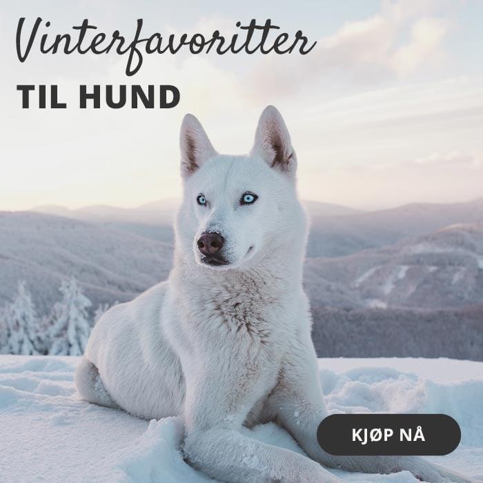 Hundebutikk kattebutikk Norge rabatt