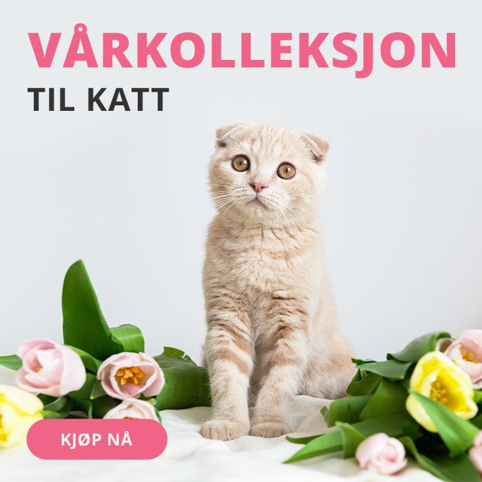 Vårkolleksjon katt