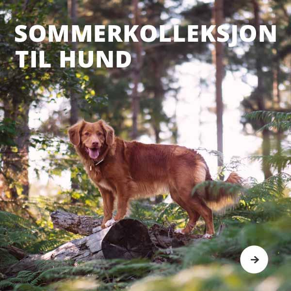 Sommerkollekjon til hund