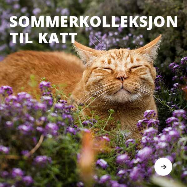 Sommerkollekjon til katt