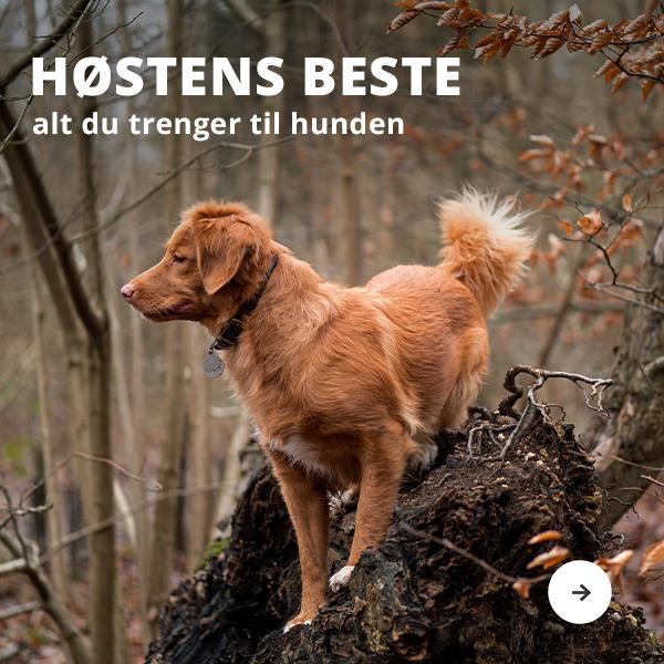 Høstens beste til hund