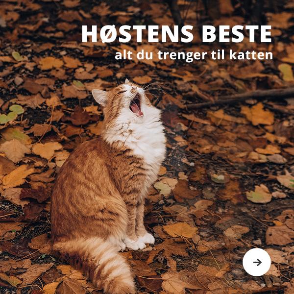 Høstens besten til katt