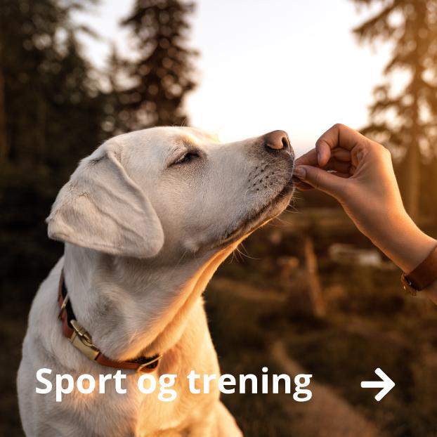 sport trening hund