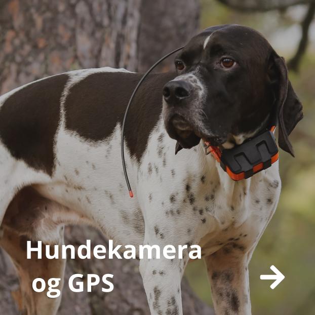 Kjøp Hundekamera og GPS til hund på nett i Norge