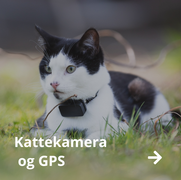 Kattekamera og GPS butikk