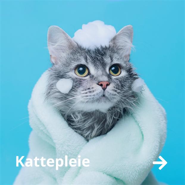 Kattepleie kjøp