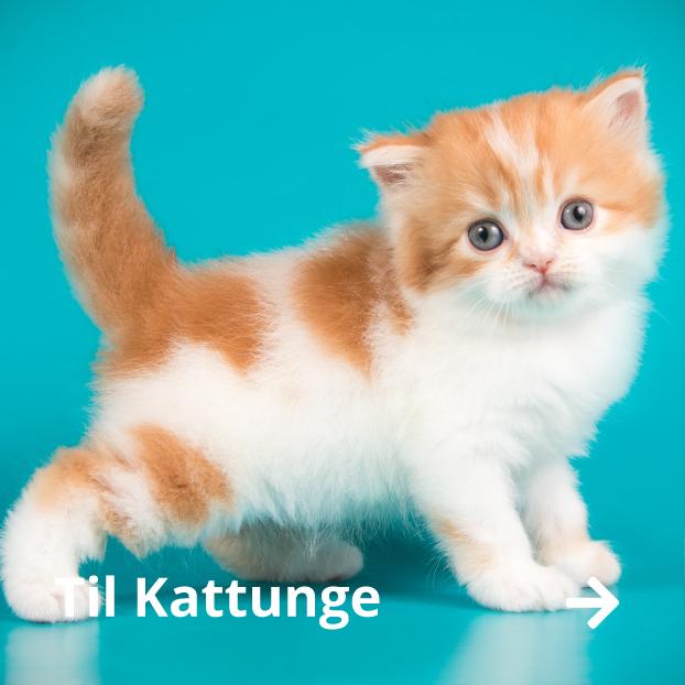 Kattungemat, bilbur kattunge, matskål liten katt, utstyr kattunge på nett