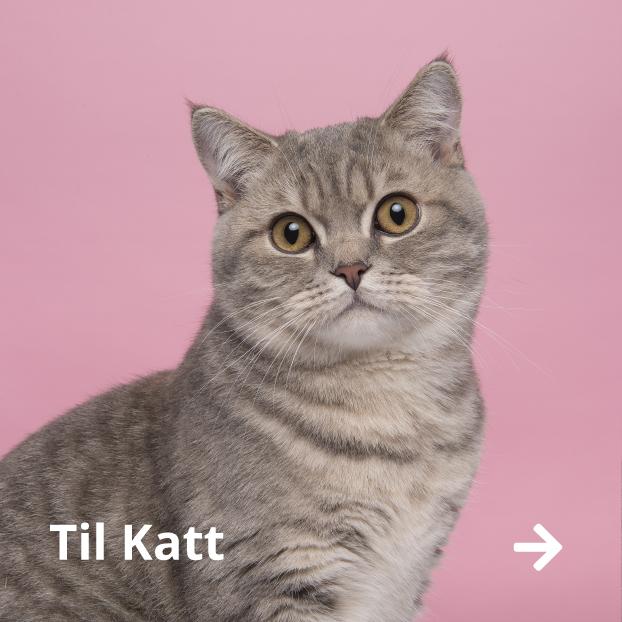 Katteutstyr butikk norge